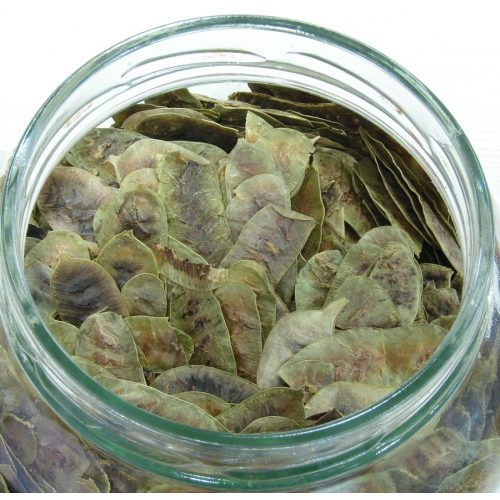 Φύλλα Αλεξάνδρειας